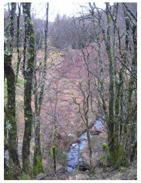 Figure 3.1: Most northerly stream which crosses the proposed bypass (looking upstream) (chainage 1235m)