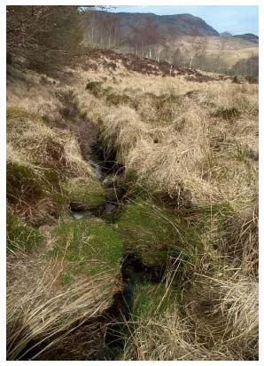 Figure 3.3: Small stream (second most southerly) above proposed route (looking upstream, west-northwest) (chainage 250m)