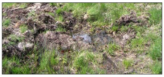 Photo 6: Waterlogged Surface